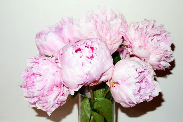 Fiori in vaso: consigli su come sceglierli e conservarli più a lungo