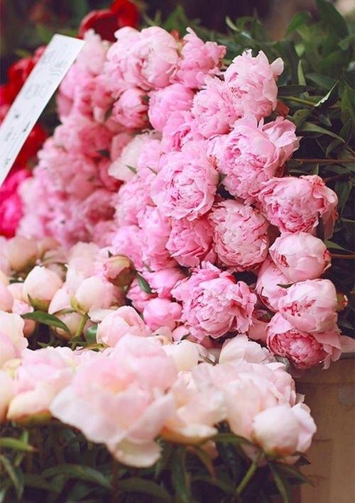 fiori in vaso cura e conservazione consigli